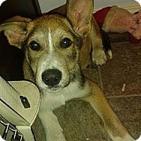 Adopt A Pet :: Howley - Saskatoon, SK