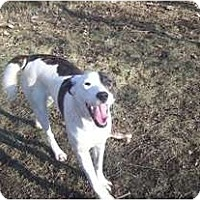 Adopt A Pet :: Dolly GREAT FAMILY DOG! - Antioch, IL