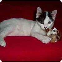 Adopt A Pet :: Charlie (Mr. Sprinkles) - Secaucus, NJ