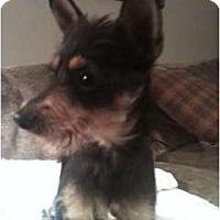 Adopt A Pet :: Vickie - Glastonbury, CT