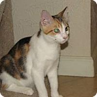 Adopt A Pet :: Josephine - Edmond, OK