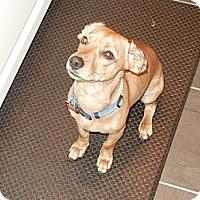 Adopt A Pet :: JUPITER - Portland, OR
