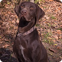 Adopt A Pet :: Drake - Lewisville, IN