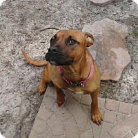 Adopt A Pet :: LAYLA - Wilmington, NC