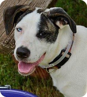 Dog Adoption Athens Georgia