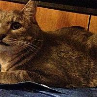 Adopt A Pet :: Corky - Baton Rouge, LA