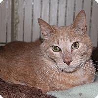 Adopt A Pet :: Dixon - Centerton, AR