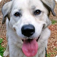 Adopt A Pet :: Kylie - Needs Foster - Beacon, NY