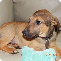 Adopt A Pet :: Luke - Knoxville, TN