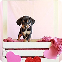 Adopt A Pet :: Ellsee - Waldorf, MD