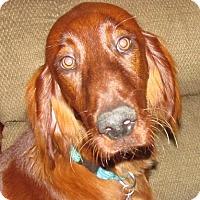 Adopt A Pet :: BENTLEY - Pine Grove, PA