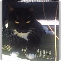 Adopt A Pet :: Barn CATS - Virginia Beach, VA
