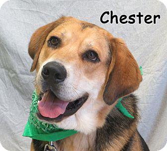 Shepherd (Unknown Type)/Basset Hound Mix Puppy for adoption in Warren, Pennsylvania - Chester