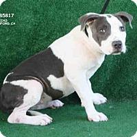 Adopt A Pet :: A085817 - Hanford, CA