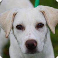 Adopt A Pet :: Donut- ADOPTION IN PROGRESS - Nanuet, NY