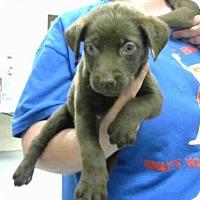 Adopt A Pet :: MOWGLI - Conroe, TX