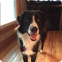 Adopt A Pet :: Jinx - Elk River, MN
