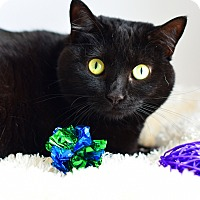 Adopt A Pet :: Sapphire - Xenia, OH