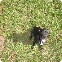 Adopt A Pet :: jada 0894 - Jacksonville, FL