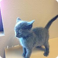 Adopt A Pet :: Mira - Idaho Falls, ID