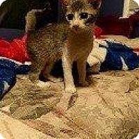 Adopt A Pet :: GARGOYLE - Hampton, VA