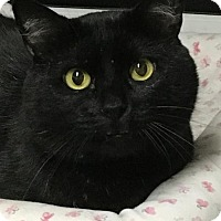 Adopt A Pet :: Blackjack - San Jose, CA