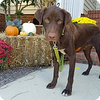 Adopt A Pet :: Coby - New Oxford, PA