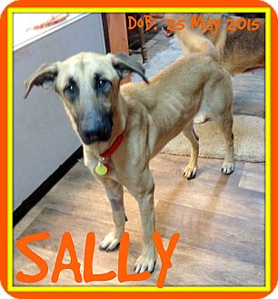German Shepherd Dog Mix Dog for adoption in Jersey City, New Jersey - SALLY