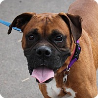 Adopt A Pet :: Bronco - Denver, CO