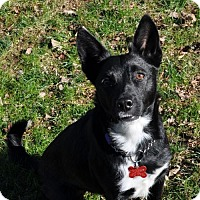 Adopt A Pet :: Brandy Lynn - Potomac, MD