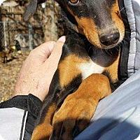 Adopt A Pet :: Jonna - Richmond, KY