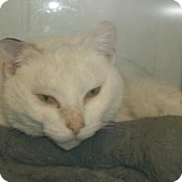 Adopt A Pet :: KITTY KITTY - Gloucester, VA