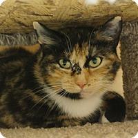 Adopt A Pet :: Mystic - Salem, NH