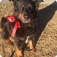 Adopt A Pet :: Marco - Littleton, CO
