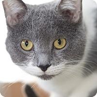 Adopt A Pet :: Gabby - LaGrange, KY
