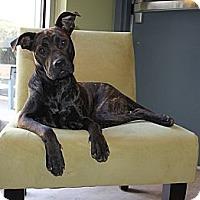 Adopt A Pet :: Fresca - Snellville, GA