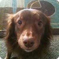 Adopt A Pet :: Maggie Sue - Washington, IL