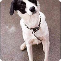 Adopt A Pet :: Atlas - Portland, OR
