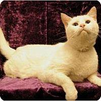 Adopt A Pet :: Grandpa - Sacramento, CA