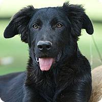 Adopt A Pet :: Biggs - Providence, RI