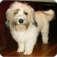 Adopt A Pet :: Kramer - Mooy, AL