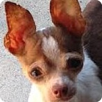 Adopt A Pet :: Jacky - Poulsob, WA