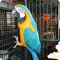Adopt A Pet :: Cordell - Neenah, WI