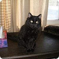 Adopt A Pet :: Coco - Douglas, ON
