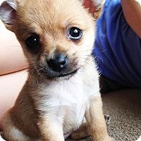 Adopt A Pet :: Hope 2 lbs - Encino, CA