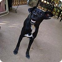 Adopt A Pet :: Merita - North Brunswick, NJ
