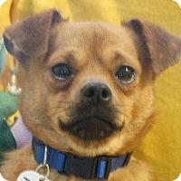 Adopt A Pet :: Issac - Vacaville, CA