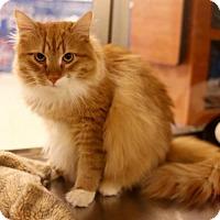 Adopt A Pet :: Fergus - Salem, MA