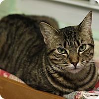 Adopt A Pet :: Katie - Carencro, LA