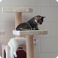 Adopt A Pet :: Carl - Chippewa Falls, WI